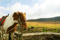 草千里と馬