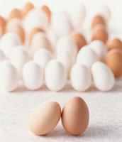 卵 07001010362| 写真素材・ストックフォト・画像・イラスト素材|アマナイメージズ