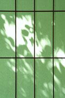 障子に映る葉のシルエット