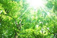 新緑の森林の木漏れ日イメージ