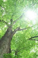 新緑と木漏れ日のイメージ
