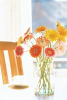 花瓶に挿したガーベラ 07092000310| 写真素材・ストックフォト・画像・イラスト素材|アマナイメージズ