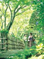 木陰を歩く浴衣の女性2人