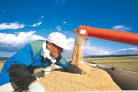 脱穀作業の男性
