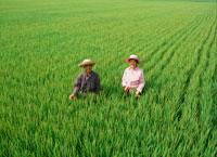 田んぼの中の夫婦