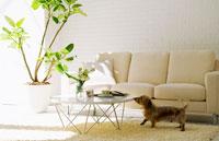 犬とソファのあるリビングルーム