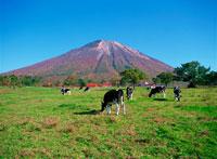 放牧場 鳥取県