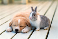 子犬とミニウサギ