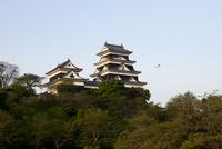 愛媛県 朝日に映える大洲城と白鷺