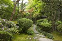 愛媛県 臥龍山荘の庭園