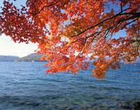 秋の十和田湖  青森県 20005000304| 写真素材・ストックフォト・画像・イラスト素材|アマナイメージズ