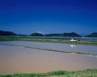 春の横手盆地の水田と鳥海山遠望 秋田県