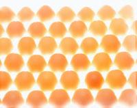 卵のパターン