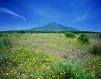 花と利尻山