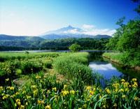 利尻山とオタトマリ沼