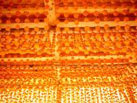 あんぽ柿 20005003284| 写真素材・ストックフォト・画像・イラスト素材|アマナイメージズ