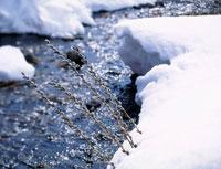雪の小川とネコヤナギ 20005003529| 写真素材・ストックフォト・画像・イラスト素材|アマナイメージズ