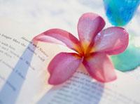 トロピカルイメージの花と本