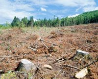 森林伐採 20005003849| 写真素材・ストックフォト・画像・イラスト素材|アマナイメージズ