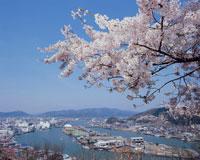日和山より見た桜と石巻市全景