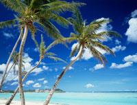 タモンビーチのヤシの木
