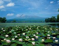 睡蓮咲く大沼と駒ヶ岳