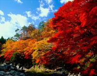 秋の夏井川渓谷