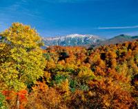 秋の月山と紅葉の木々