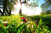朝の紅葉の落ち葉 20005005800| 写真素材・ストックフォト・画像・イラスト素材|アマナイメージズ