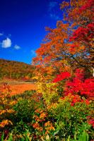紅葉の八幡平・大沼