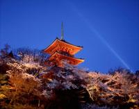 清水寺三重塔ライトアップと夜桜
