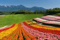 四季彩の丘 北海道 20005008196| 写真素材・ストックフォト・画像・イラスト素材|アマナイメージズ