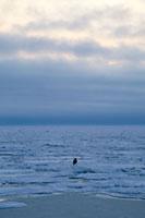 朝の流氷 北海道