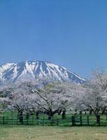 小岩井農場の春 岩手県