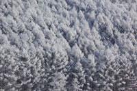 樹氷の森 北海道