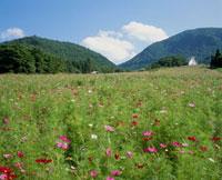 面白山高原 山形県 20005009046| 写真素材・ストックフォト・画像・イラスト素材|アマナイメージズ