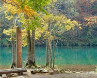 ドッコ沼 山形県