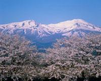 鳥海山と桜 秋田県 20005009162| 写真素材・ストックフォト・画像・イラスト素材|アマナイメージズ