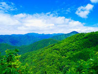 夏の白神山地 秋田県