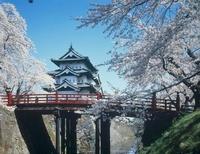 弘前城と桜 青森県