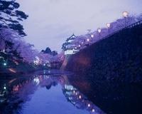 弘前さくらまつりの夜桜 青森県 20005010851| 写真素材・ストックフォト・画像・イラスト素材|アマナイメージズ