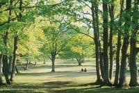 新緑の萱野高原 青森県