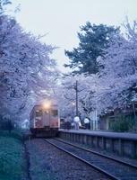 芦野公園の金木桜まつりと津軽鉄道 青森県