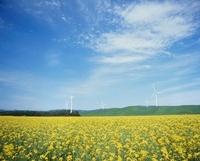 菜の花と風力発電 青森県