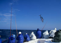 カツオ1本釣り漁