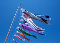 鯉のぼり 千葉県