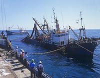 イワシ巻網漁 20007009232| 写真素材・ストックフォト・画像・イラスト素材|アマナイメージズ