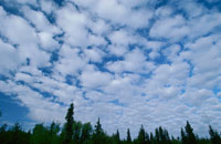 青空の白い雲と樹木