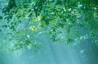 木洩れ日 20010000239| 写真素材・ストックフォト・画像・イラスト素材|アマナイメージズ