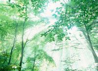 木洩れ日 20010000245| 写真素材・ストックフォト・画像・イラスト素材|アマナイメージズ
